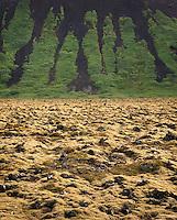 Moss covered lava fields, southwest Sn?¶fellsnes Peninsula Iceland, Europe