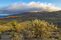 Early morning light shines on a yucca plant and a large cholla cactus. The foothills of the Providence Mountains are partially obscured by a low cloud. The road in between is Kelbaker Road.<br /> <br /> Date Taken: 1/31/14