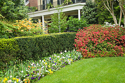 Washington DC; USA: Spring flowering in Washington DC around a house, typically showing tulips and azaleas.Photo copyright Lee Foster Photo # 30-washdc79715