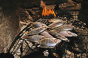 Tilapia from the Niger River being cooked over a wood fire in Kouakourou, Mali. (From a photographic gallery of fish images, in Hungry Planet: What the World Eats, p. 205).