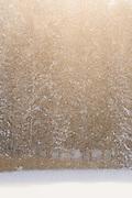 Snow falling from spruce trees in forest along lake Valgums coast, Kemeri National Park (Ķemeru Nacionālais parks), Latvia Ⓒ Davis Ulands | davisulands.com