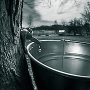 Making of maple syrup. (Photo © Andy Manis)