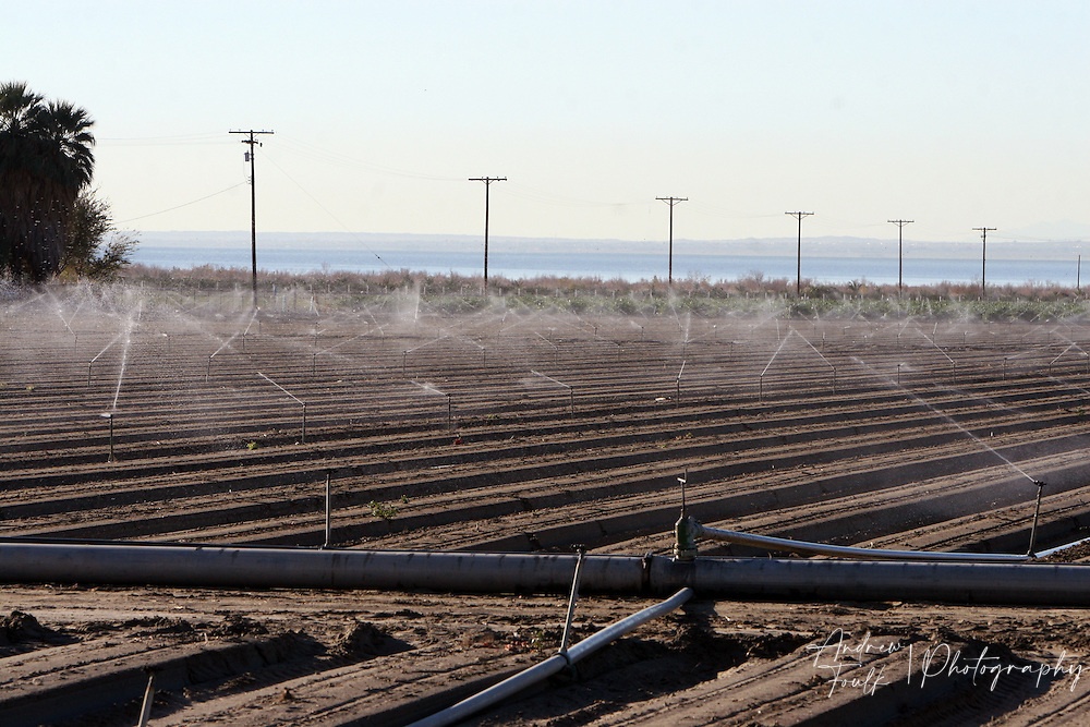 New crops get watered as the Salton Sea sits behind.