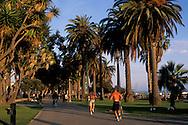 Palm Tree lined walking path promenade in park on the coast at Santa Monica, Los Angeles County, California