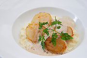 Scallops in foamy white wine sauce and parsley at the xxxx restaurant. Paris, France.
