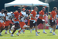Copyright David Richard<br />Cleveland Browns quarterbacks (in orange, from left) Josh Harris, Charlie Frye, Trent Dilfer and Lang Campbell run sprints during the first day of training camp in Berea, Ohio.
