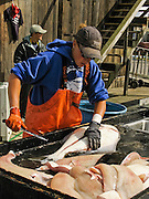 """A worker fillets a halibut, which is a flatfish, genus Hippoglossus, from the family of the right-eye flounders (Pleuronectidae). In Alaska, the town of Homer claims to be the """"halibut fishing capital of the world."""" Village nicknames include """"Homer - a quaint little drinking village with a fishing problem"""" [bumper sticker] and """"the end of the road."""" Homer is the southernmost town on the contiguous Alaska highway system. Homer is at the end of Sterling Highway (part of Alaska Route 1) on Kenai Peninsula, on the shore of Kachemak Bay, Alaska, USA. For licensing options, please inquire."""