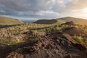 View Point, Isabella Island. Galabagos, Ecuador, South America