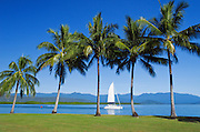 Sailing boat heading to the Great Barrier Reef past palm trees, blue sky and the mountains in Port Douglas, Queensland, Australia. <br /> <br /> Editions:- Open Edition Print / Stock Image