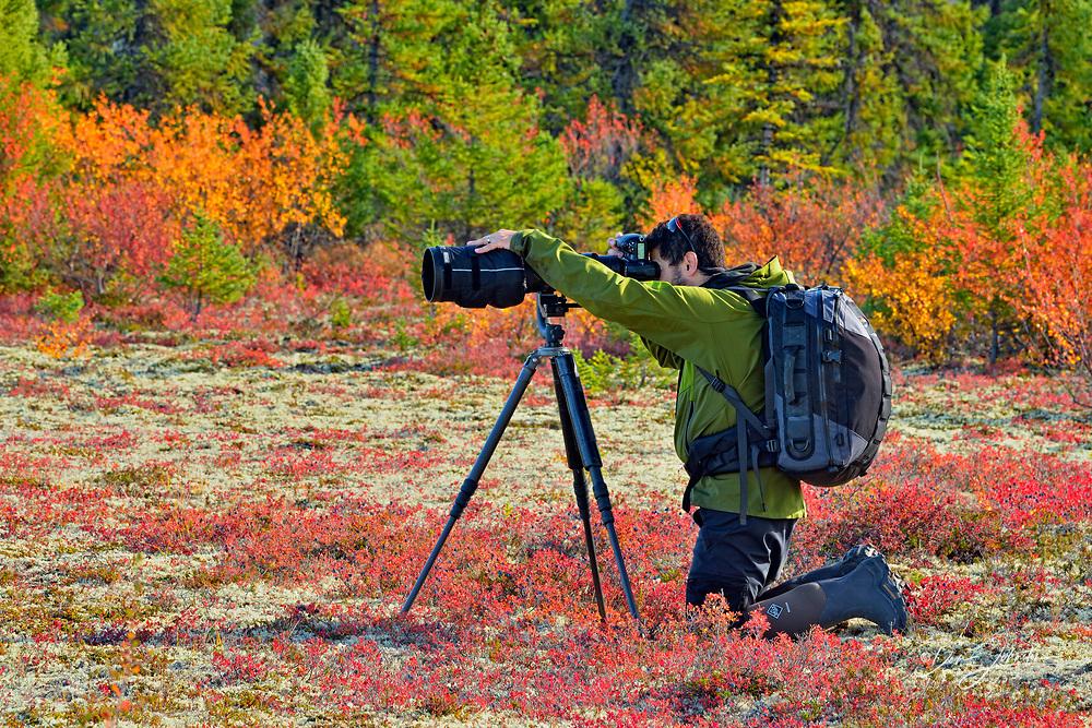 Photographer in taiga landscape in early autumn, Arctic Haven Lodge, Nunavut, Nunavut, Canada