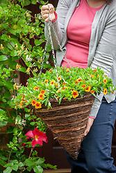 Putting up hanging basket of Calibrachoa.