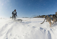 86th annual Laconia World Championship Sled Dog races.  Karen Bobotas for the Laconia Daily Sun