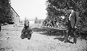9220-03A. Bear (2 negs) probably Dodge Park 1925-26, Oregon.