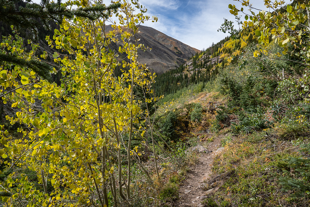 Hiking through early fall color along North Taylor Creek with Cooper, Janet, Ryan and Sage the dog.