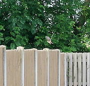 Birds on the fence Birds on the fence
