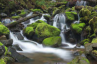 The Sol Duc River cascades through moss covered rocks, Olympic National Park, Washington.
