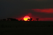 Africa, Tanzania, Serengeti National Park Sunset at the park