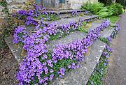 Purple flower steps, Stanton, Gloucestershire