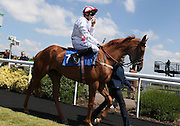 Jockey Luke Morris on Zamani in the Parade Ring before the 2.20 race at Brighton Racecourse, Brighton & Hove, United Kingdom on 10 June 2015. Photo by Bennett Dean.