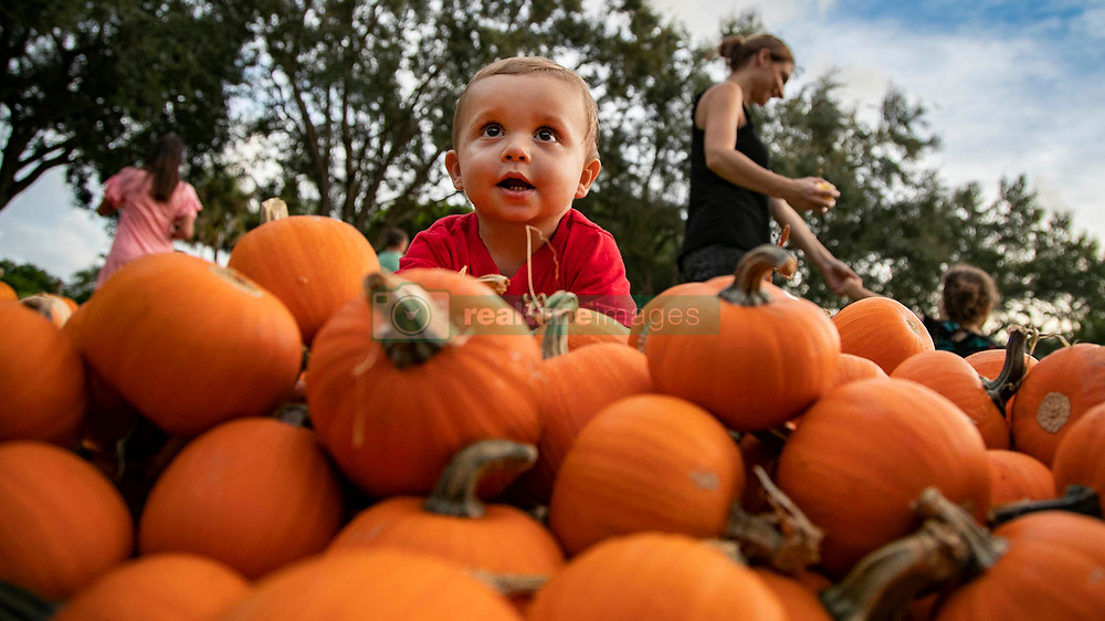 October 12, 2018 - Wellington, Florida, U.S. - Tommy Syryca, 1, Wellington, climbs a mountain of small pumpkins at St. Peter's United Methodist Church in Wellington, Fla. St. Peter's is showing a movie in the patch, ''Spookley the Square Pumpkin,'' Saturday, October, 13 from 6-8 pm. All proceeds from the pumpkin patch support youth programs at the church. The Pumpkin Patch Hours: Monday-Saturday 9 am - 8 pm, Sunday 12 pm - 8 pm  (Credit Image: © Allen Eyestone/The Palm Beach Post via ZUMA Wire)