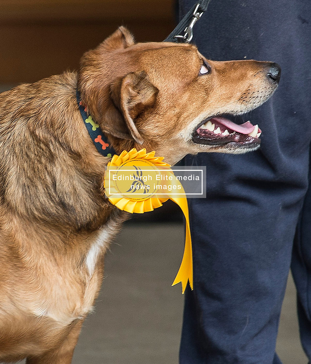 A dog sporting a Lib Dem rosette at a victory rally in Milngavie, Glassgow.<br /> <br /> © Dave Johnston/ EEm