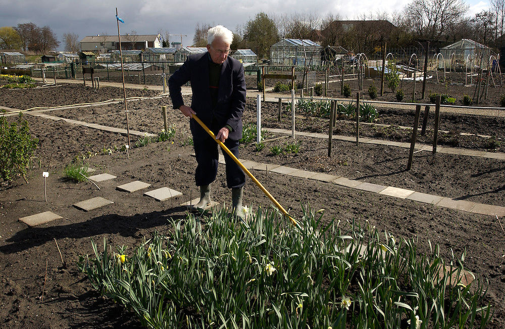 """Nederland, Zoetermeer, 3 april 2003.Volkstuincomplex 'Levenslust"""" . Tuintjes voor Milieuvriendelijk tuinieren, zegt het bord bij de ingang..Hr. Kamphuis (81 jaar!) schoffelt in zijn zeer nette tuintje tussen de narcissen. ..Foto (c) Michiel Wijnbergh/Hollandse Hoogte"""