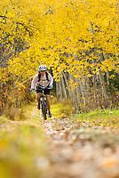 A young woman rides a mountain bike through an Aspen Grove in Jackson Hole, Wyoming (selective focus).