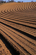 A07XYD Pattern made by ploughing in sandy soil of Suffolk Sandlings England