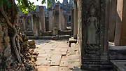 Ta Prohm temple ruins in Angkor Wat, Siem Reap, Cambodia