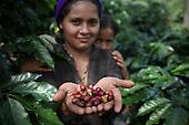 Costa Rica: COOPEAGRI Fairtrade Coffee