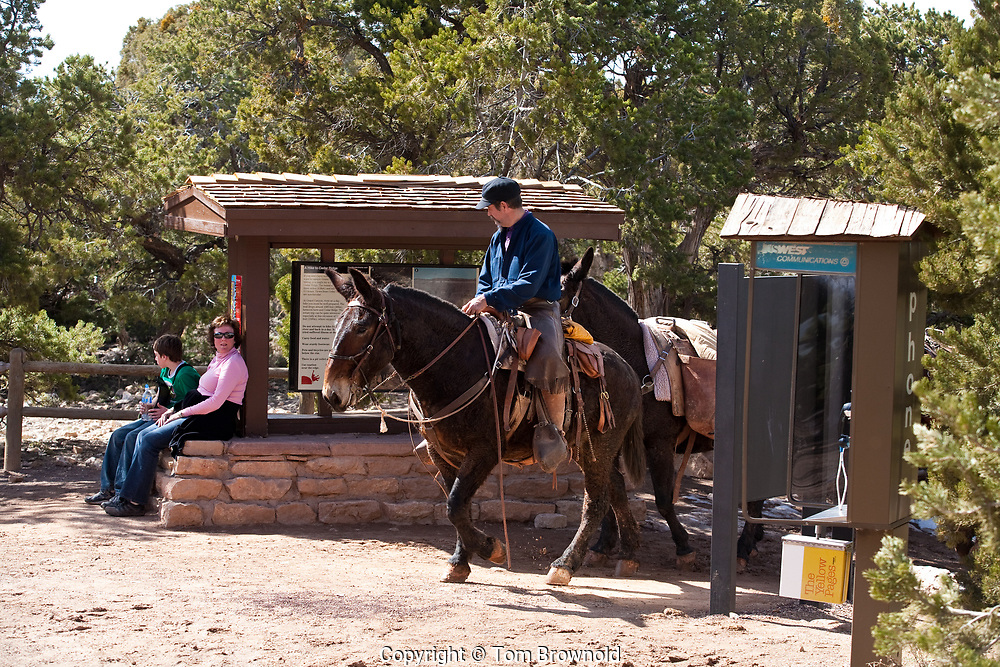 Grand Canyon livery operation on the South Rim of the Grand Canyon, National Park. This is a service provided by Xanterra Parks and Resorts to service their hotel service at Phantom Ranch and to provide a guided equine tour of the trail system there and back.