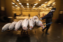 Man pulling barrow full of frozen tuna at famous fish market at Tsukiji in Tokyo