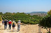 Israel, Judea Hills, Tzora winery and vineyards, Visitors on tour of the Cabernet plot near Shoresh June 2007