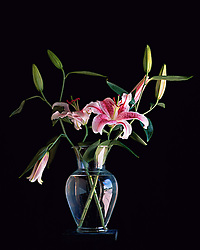 Vertical image of two stem of Stargazer Lilies in a clear glass vase against a solid black background, illuminated by soft window light