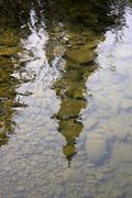 Reflection of a pine tree, Tobin Harbor, Isle Royale National Park, Lake Superior, Michigan, USA