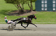 Goshen, NY -  A driver and horse head for the finish line during a harness race at Goshen's Historic Track on June 7, 2008.
