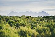 Ruggedy Range - a narrow but tough hill group across the flats, The Southern Circuit, Stewart Island / Rakiura, New Zealand Ⓒ Davis Ulands   davisulands.com