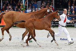 56 - Go-Melody VMH<br /> KWPN Paardendagen 2011 - Ermelo 2011<br /> © Hippo Foto - Leanjo de Koster