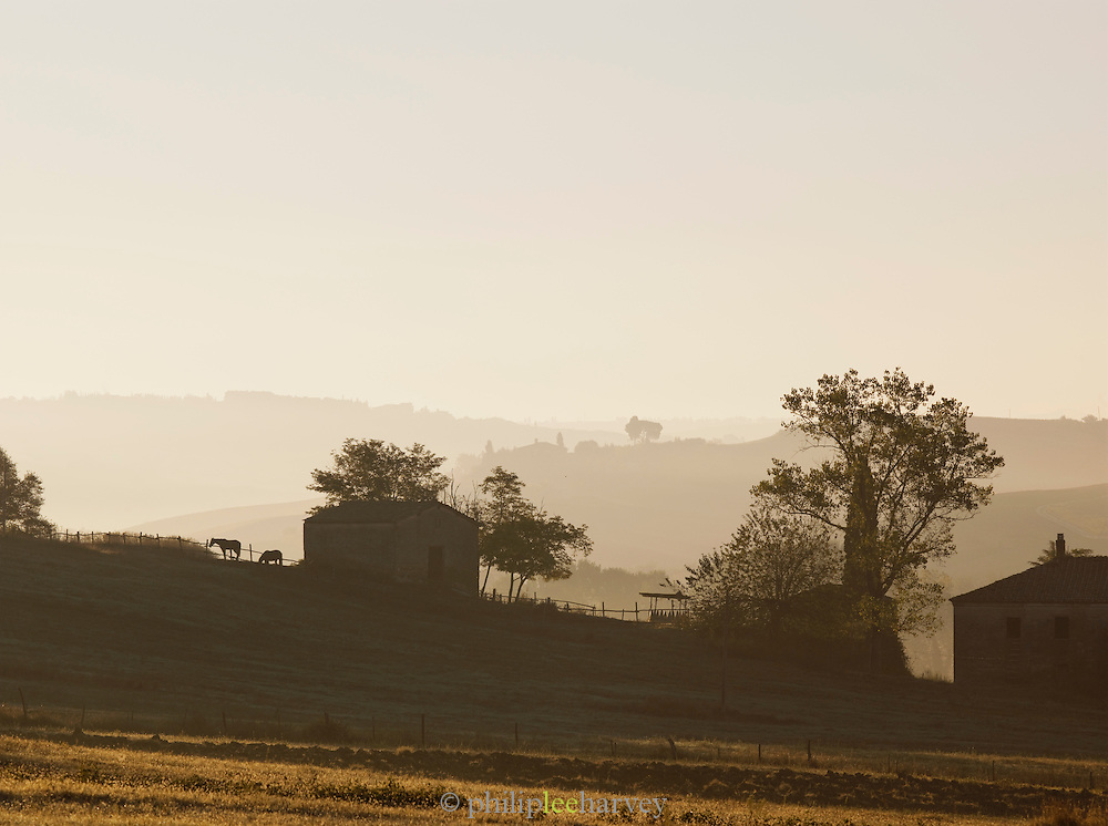 A farmstead in the beautiful hilly landscape of Tuscany at dawn at Val d'Orcia, Italy