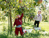 Jeffrey Matthew reaches up to pick a Cortland apple with his sister Rachel at Smith Orchard in Belmont on Sunday afternoon.  (Karen Bobotas/for the Laconia Daily Sun)