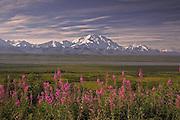 Mt. McKinley (Denali), Fireweed, Fall, Thorofare River, Denali National Park, Alaska. Digital original ©Robin Brandt #2006_3123