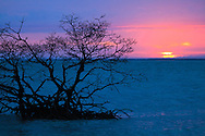 Sunset in the Gulf of Mexico behind a solitary mangrove tree in shallow water off Florida's Gullivan Key.<br /> WATERMARKS WILL NOT APPEAR ON PRINTS OR LICENSED IMAGES.