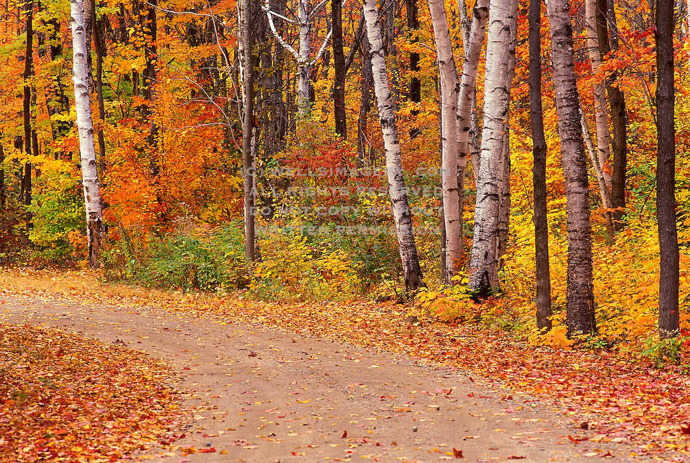 Image of a road in the White Mountains National Forest near Franconia Notch in the fall, New Hampshire, American Northeast by Randy Wells
