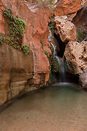 Royal Arch Creek trickles into Elves Chasm to a clear pool, Grand Canyon National Park, © David A. Ponton
