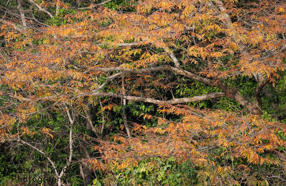 Foliage over the Rupununi River, Guyana.