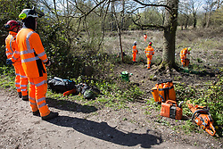 Denham, UK. 6th April, 2021. Tree surgeons observe the felling of trees alongside the Grand Union Canal as part of electricity pylon relocation works in Denham Country Park connected to the HS2 high-speed rail link.Thousands of trees have already been felled in the Colne Valley where HS2 works will include the construction of a Colne Valley Viaduct across lakes and waterways and electricity pylon relocation.