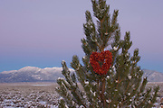Chili heart on pine tree in winter