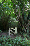 A landscape of a closed gate in English woodland, on 10th September 2018, near Lingen, Herefordshire, England UK.