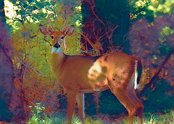 Painted Vibrant Colors Of A Wooded Scene Where A Buck Poses