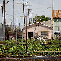 Urban Food Growing | New Orleans, LA | Local Food Economy | Drew Bird Photography | San Francisco Freelance Photographer | Freelance Photojournalist | Oakland Event Photographer